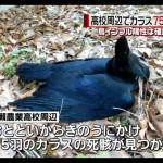 【フクシマ】 カラスが謎の大量死 福島県・農業高校の敷地周辺