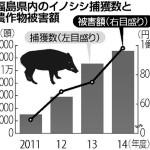 福島のイノシシから3万ベクレルのセシウム検出 食肉用に出荷できず自治体が処分に困る