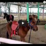 【動画】中国で本物の馬を使ったメリーゴーラウンドが登場